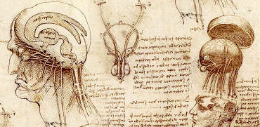 Leonardo's sketch of the human brain and skull